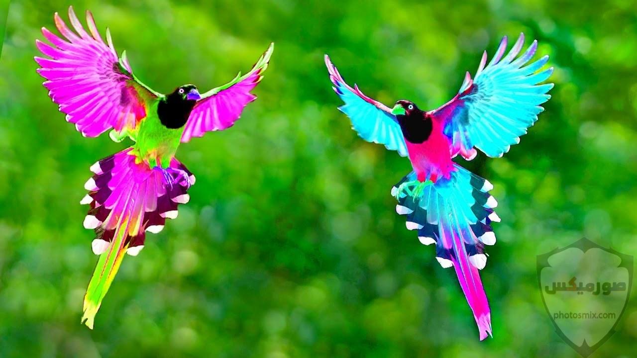 صور طير 11