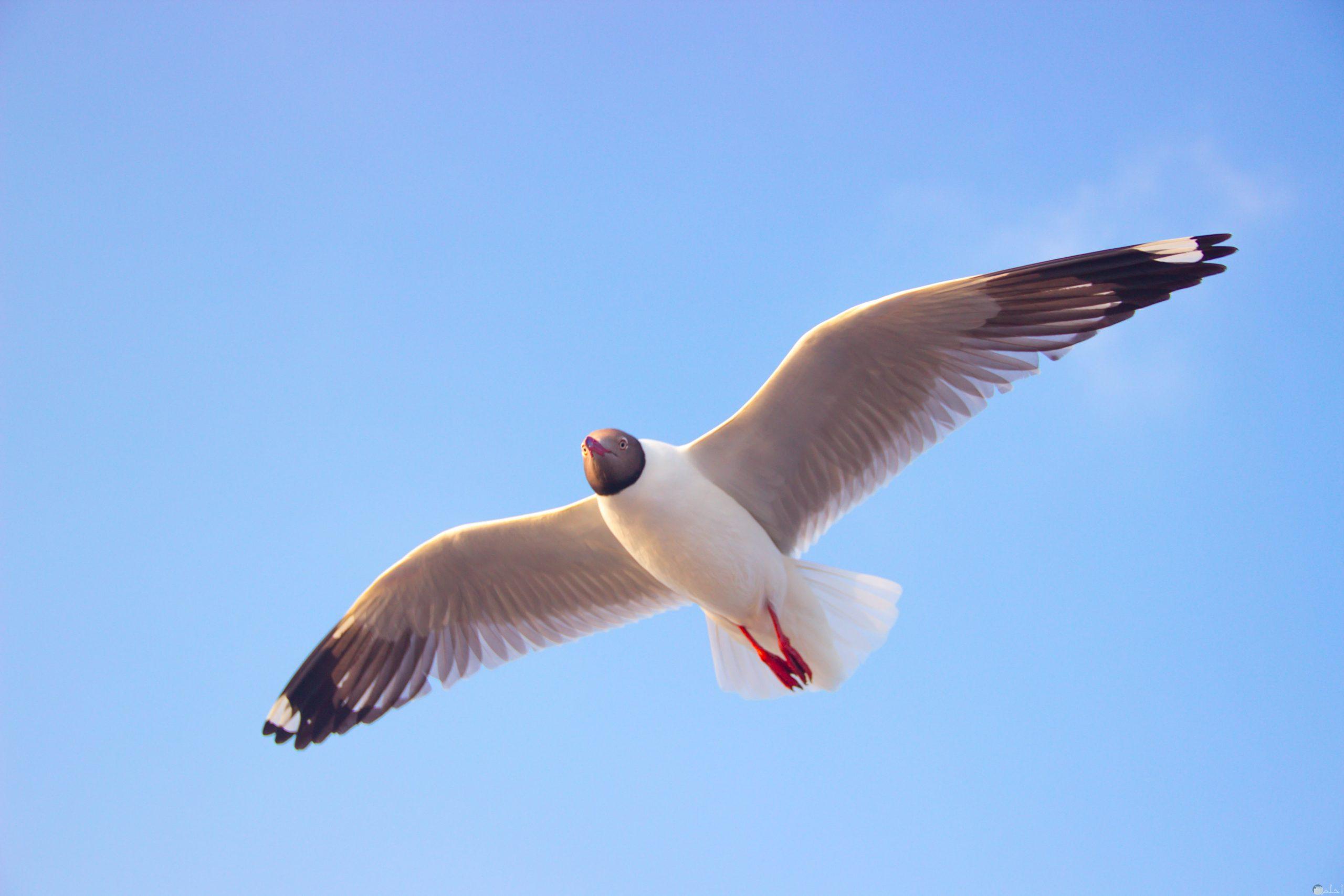 صور طيور الحب 17