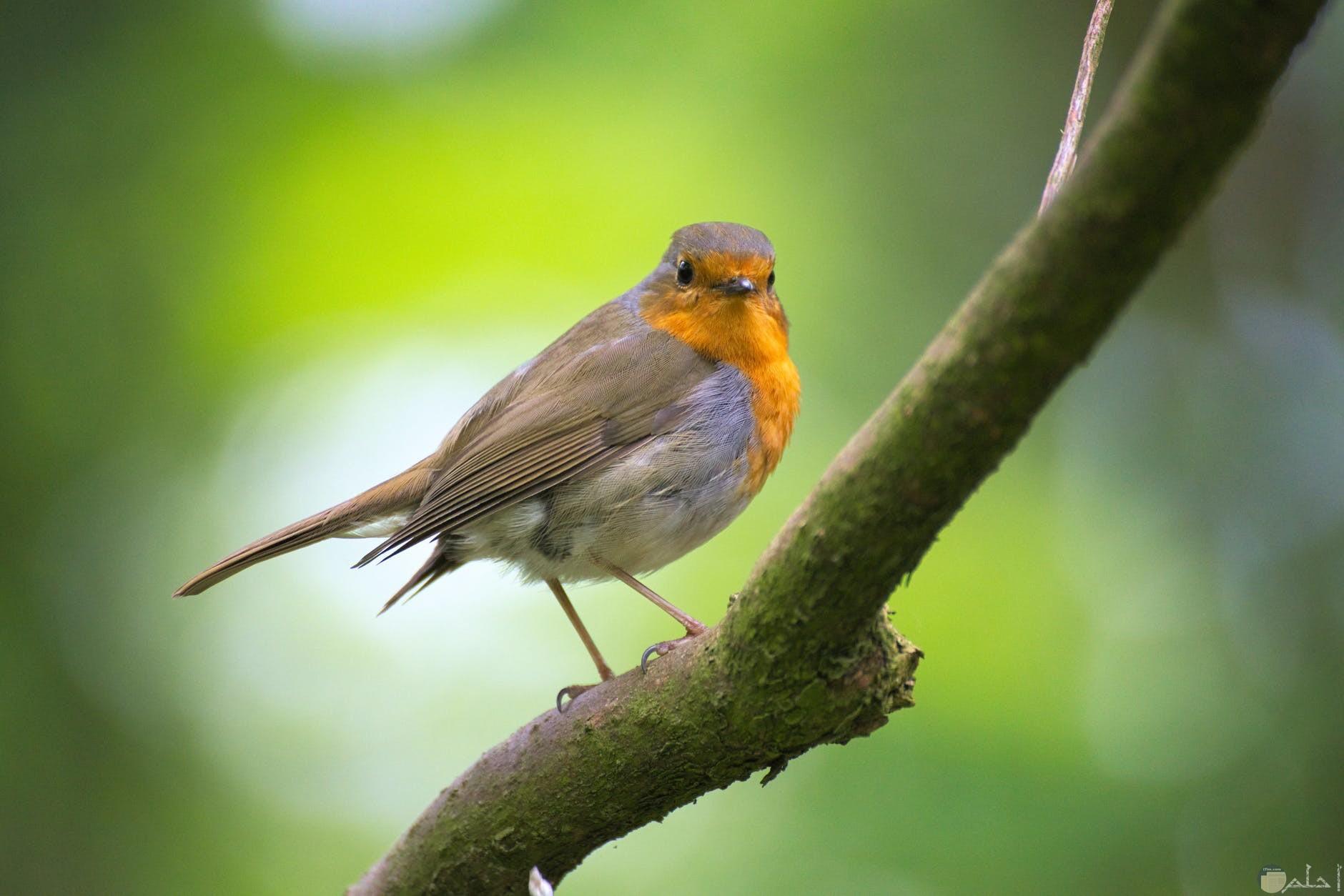 صور طيور الحب 2