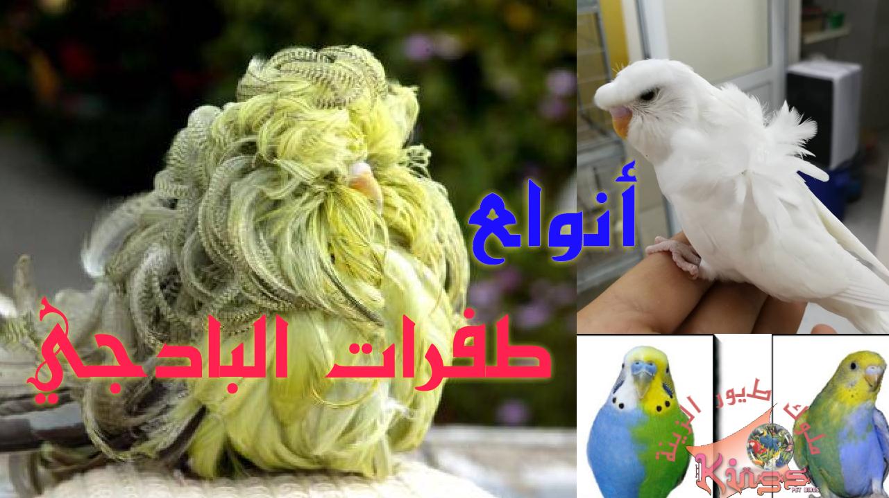صور طيور الحب 22