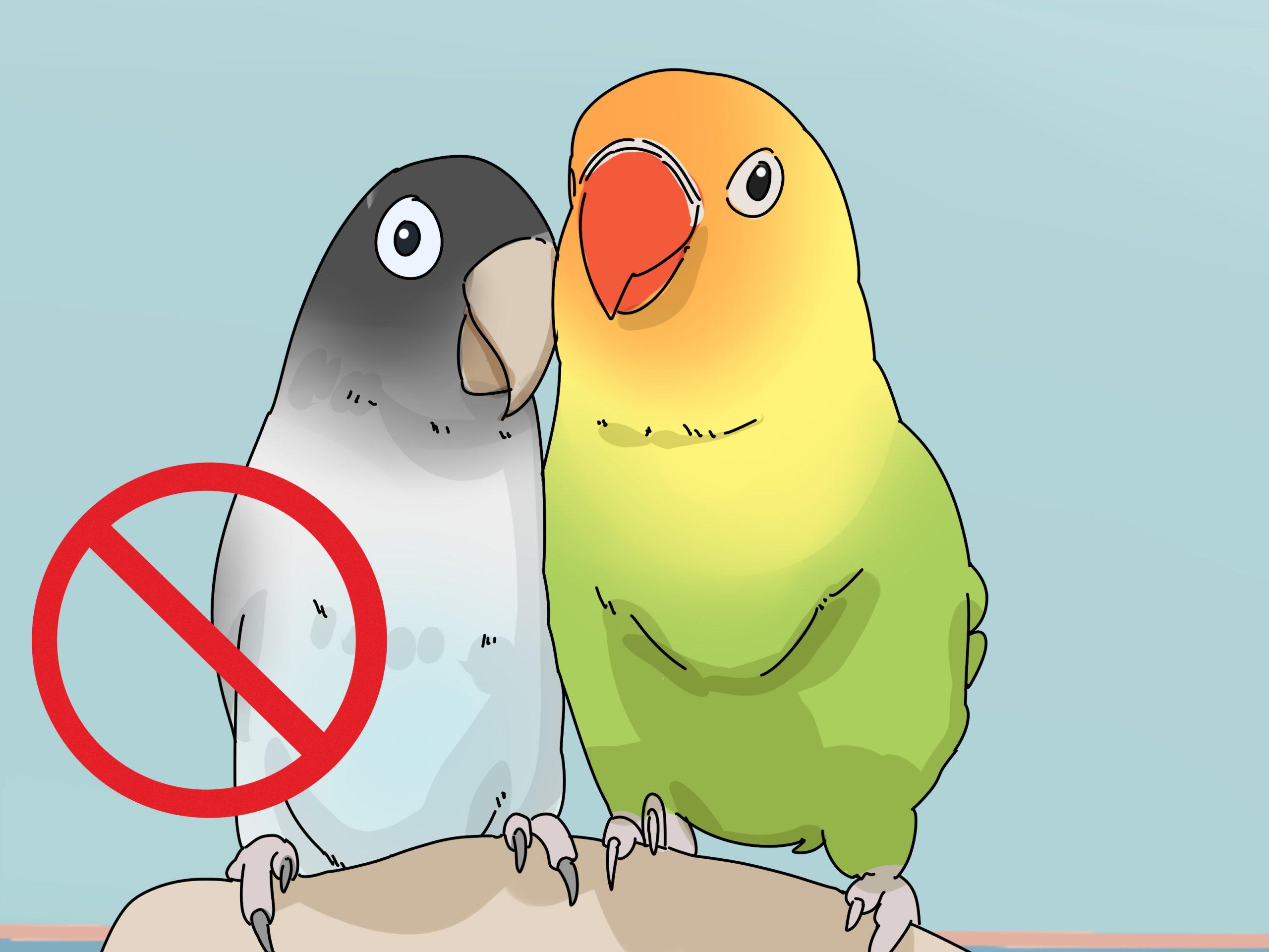 صور طيور الحب 27