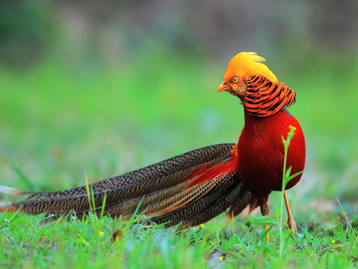 صور طيور الحب 29