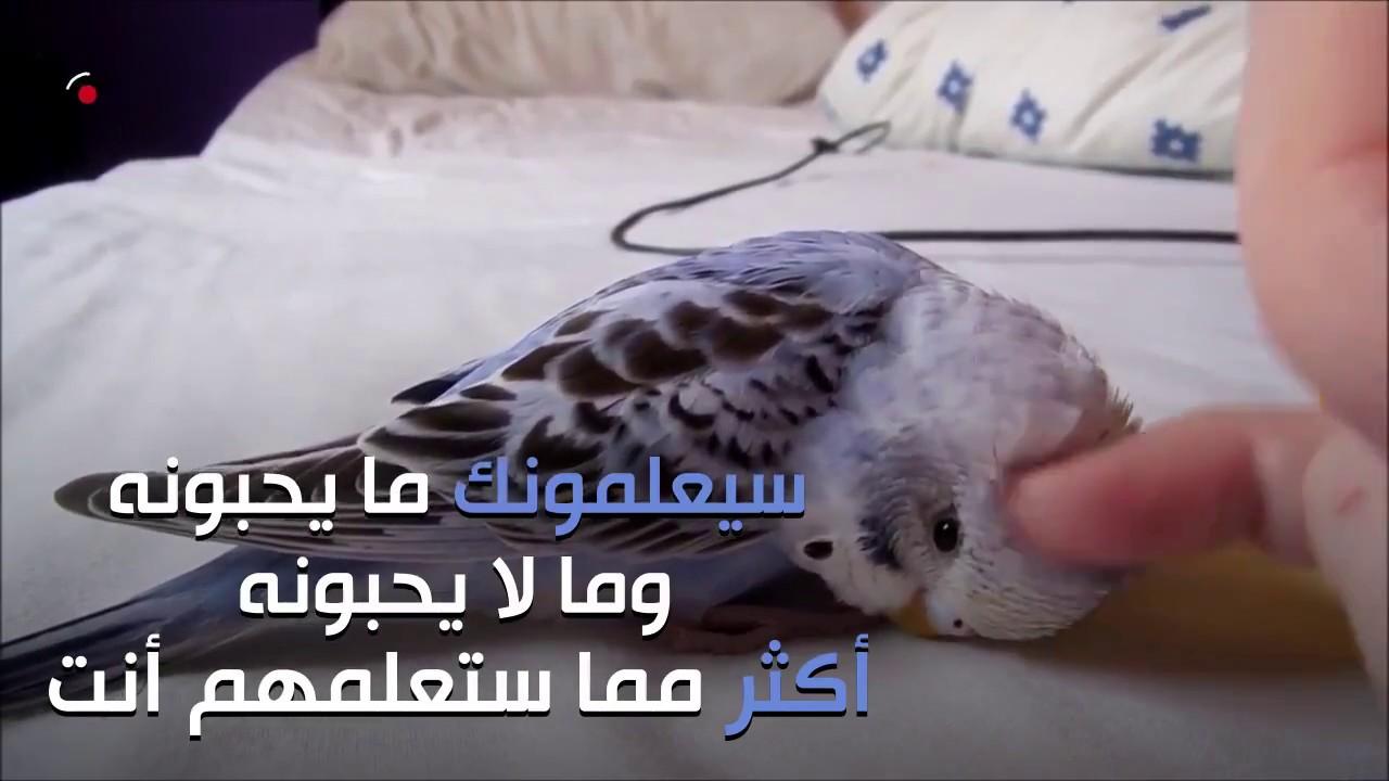 صور طيور الحب 3