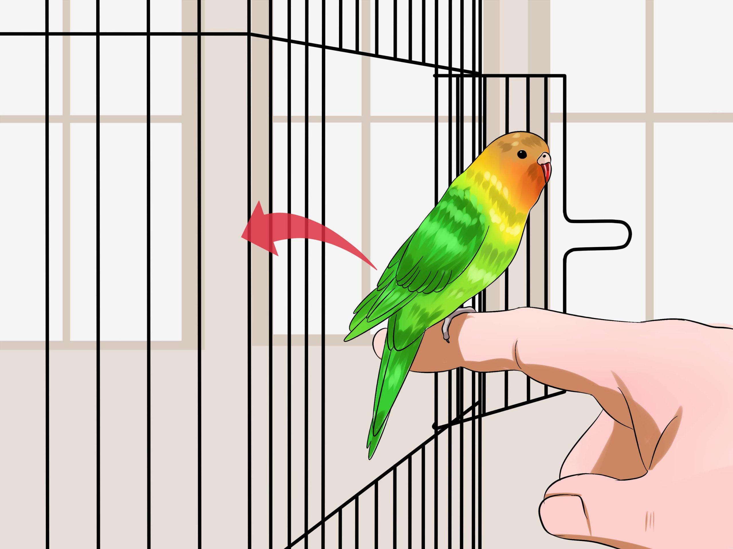 صور طيور الحب 34