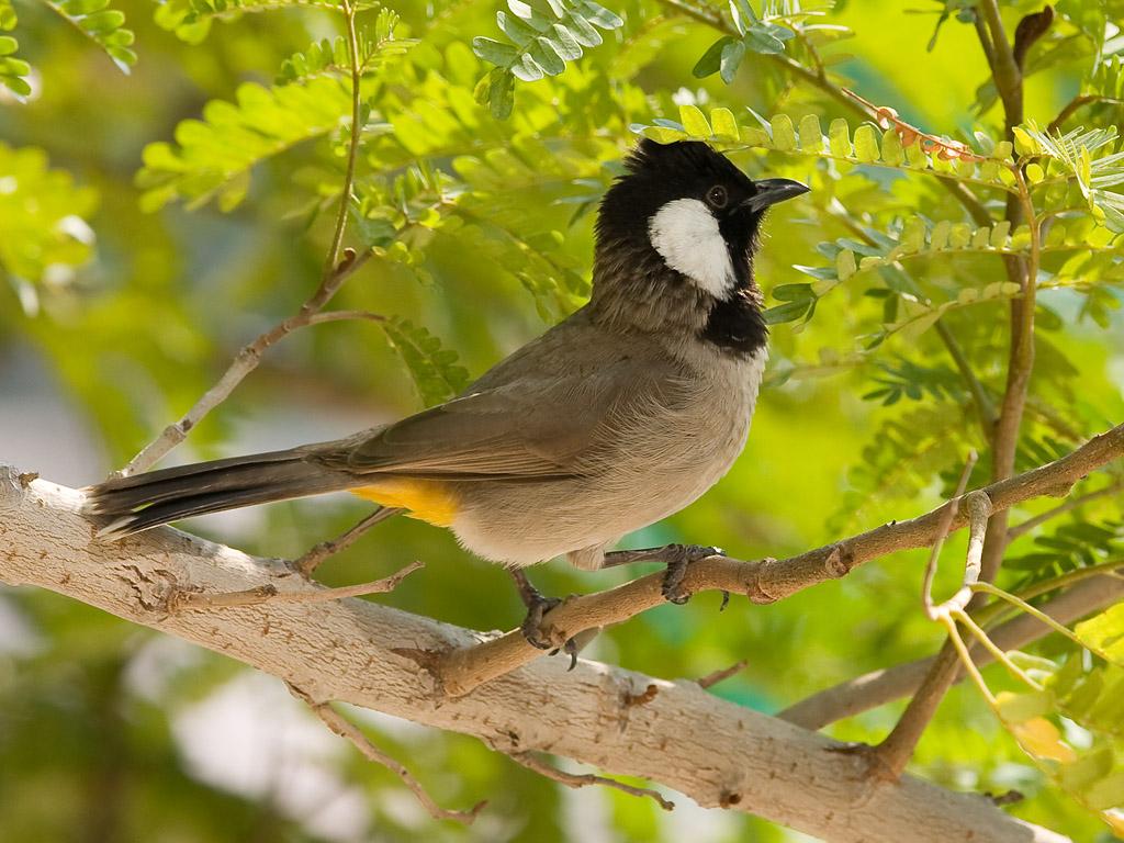 صور طيور الحب 36
