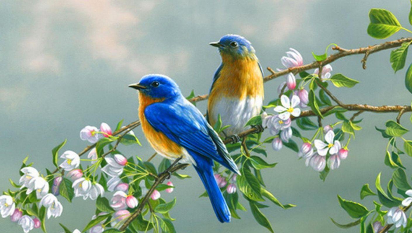 صور طيور الحب 43