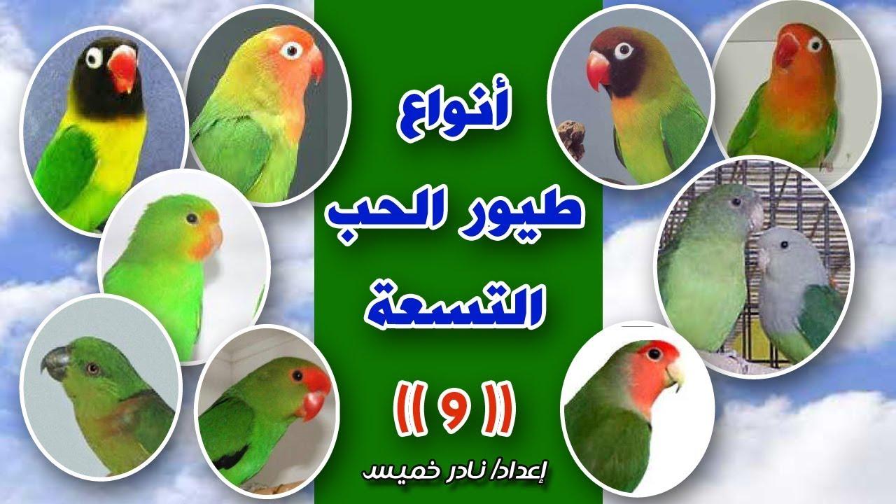 صور طيور الحب 52