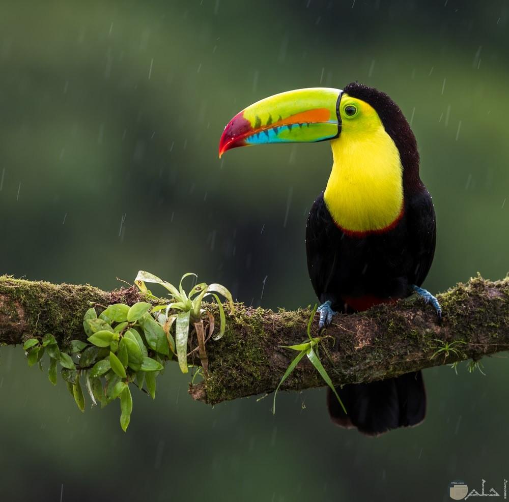 صور طيور الحب 56