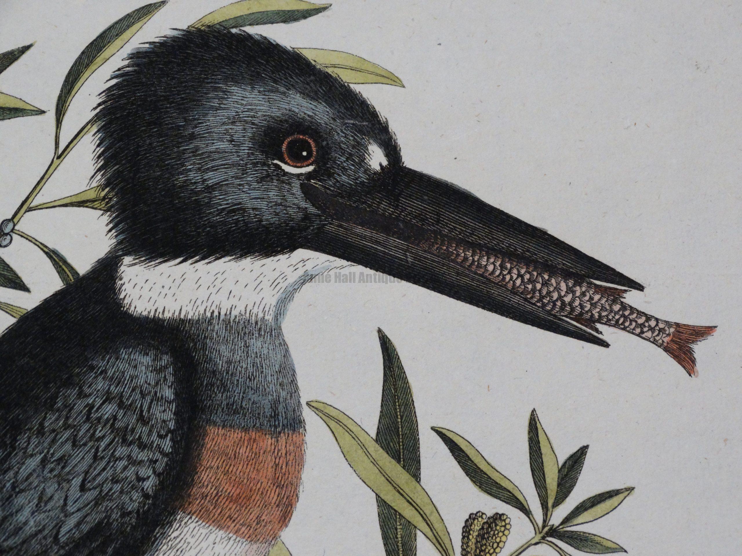 صور طيور 10