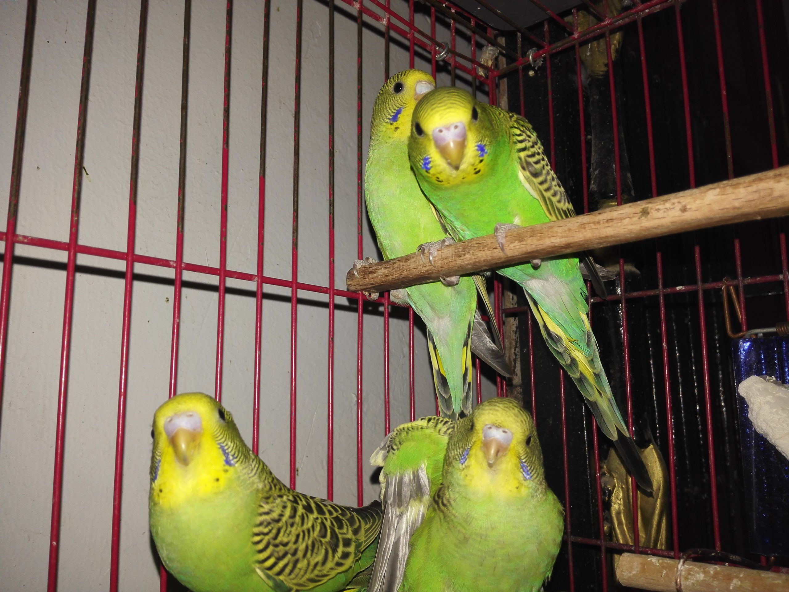 صور طيور 13