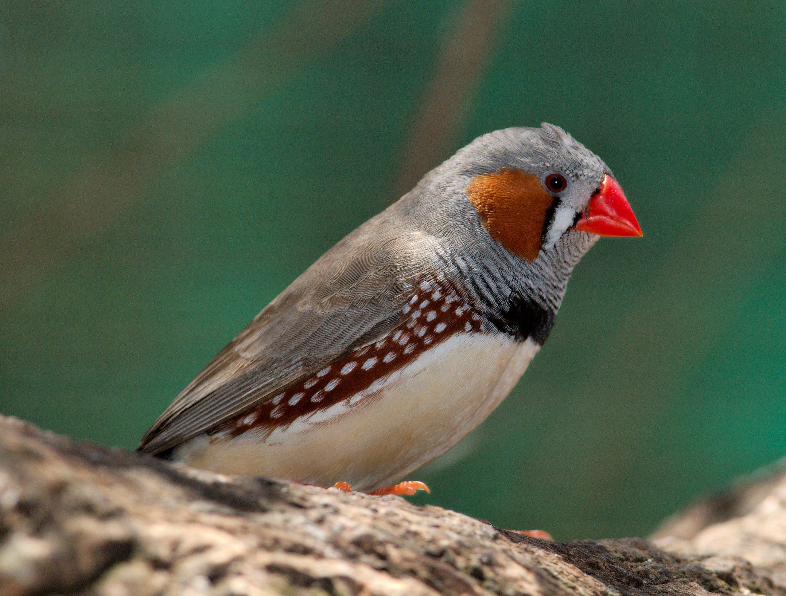 صور طيور 14