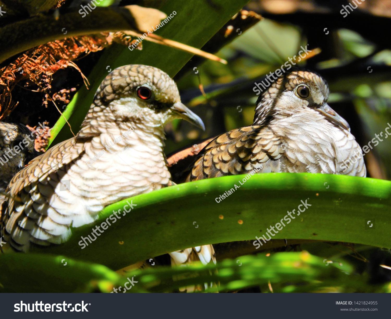 صور طيور 16