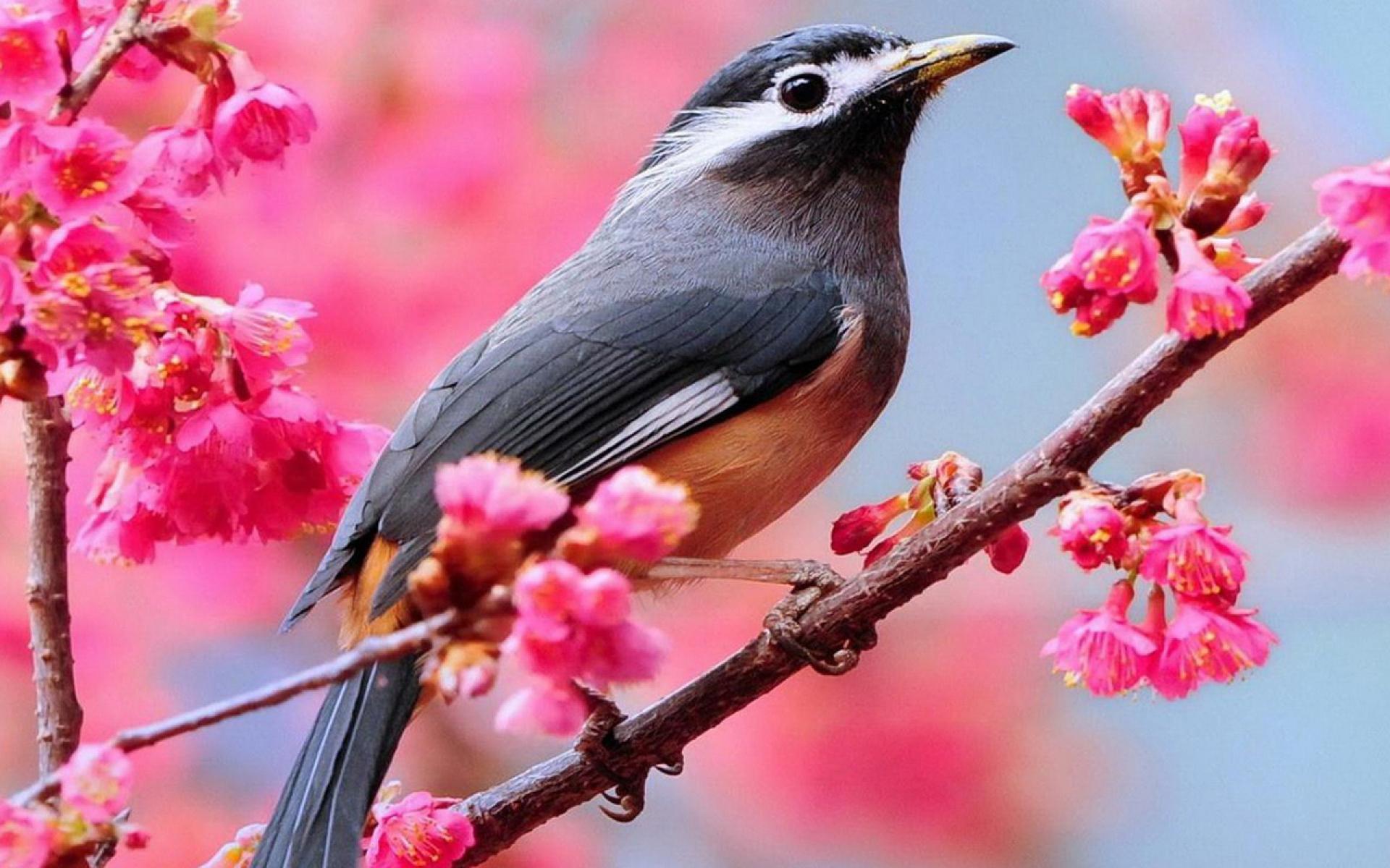 صور طيور 18