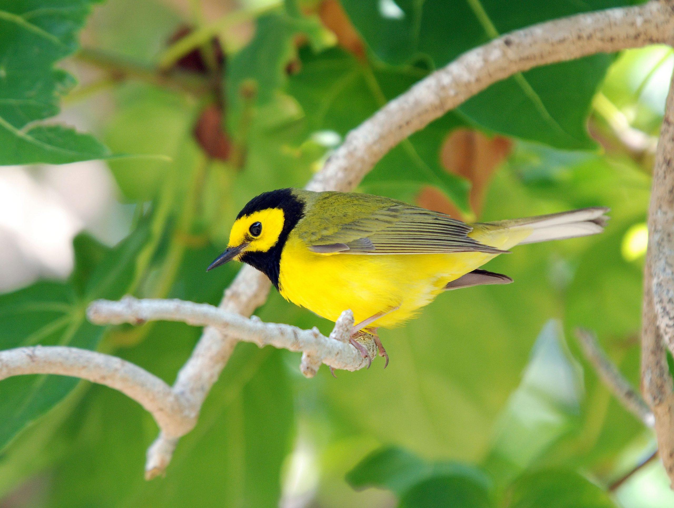 صور طيور 19