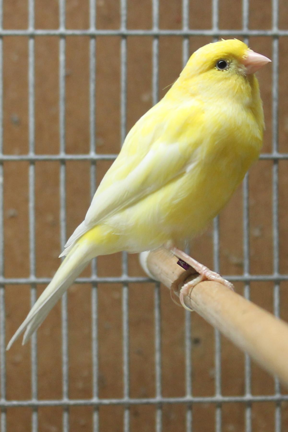 صور طيور 2
