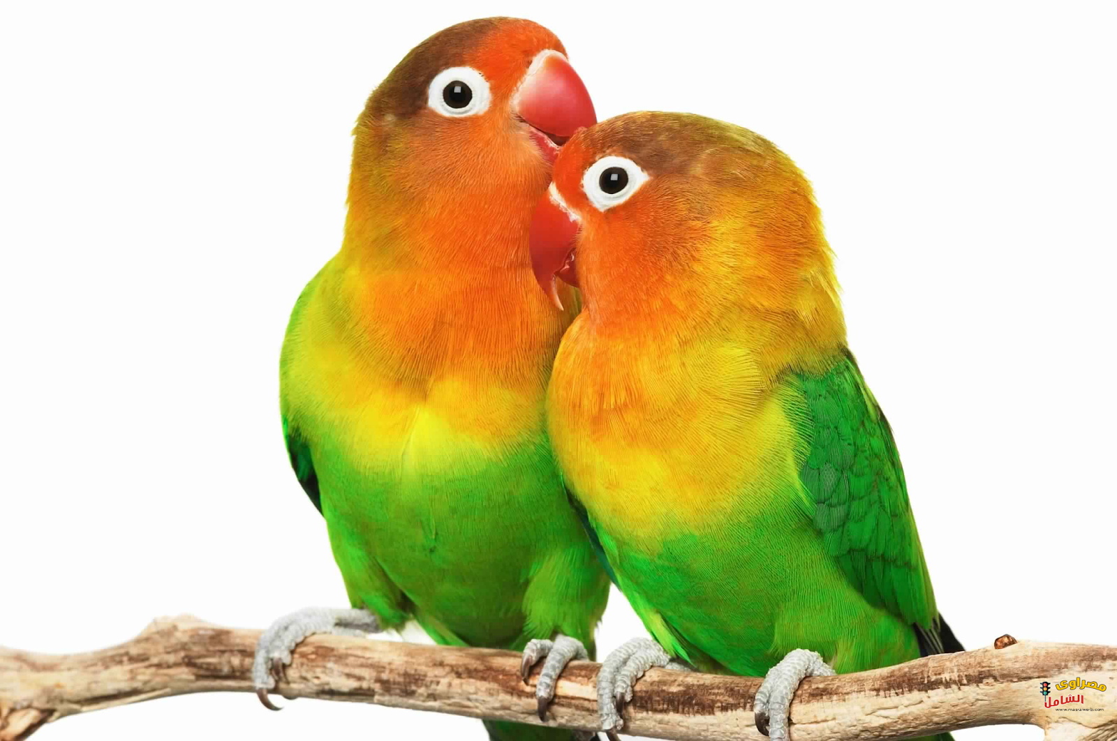 صور طيور 3