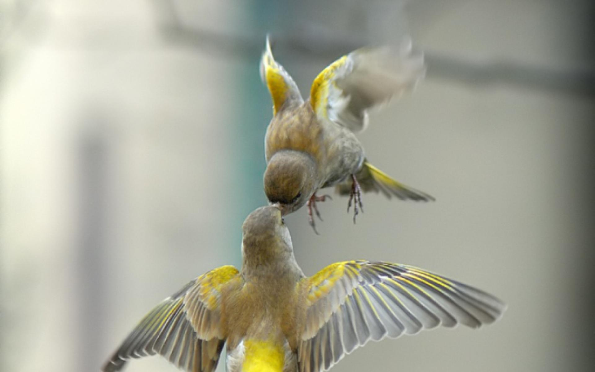 صور طيور 6