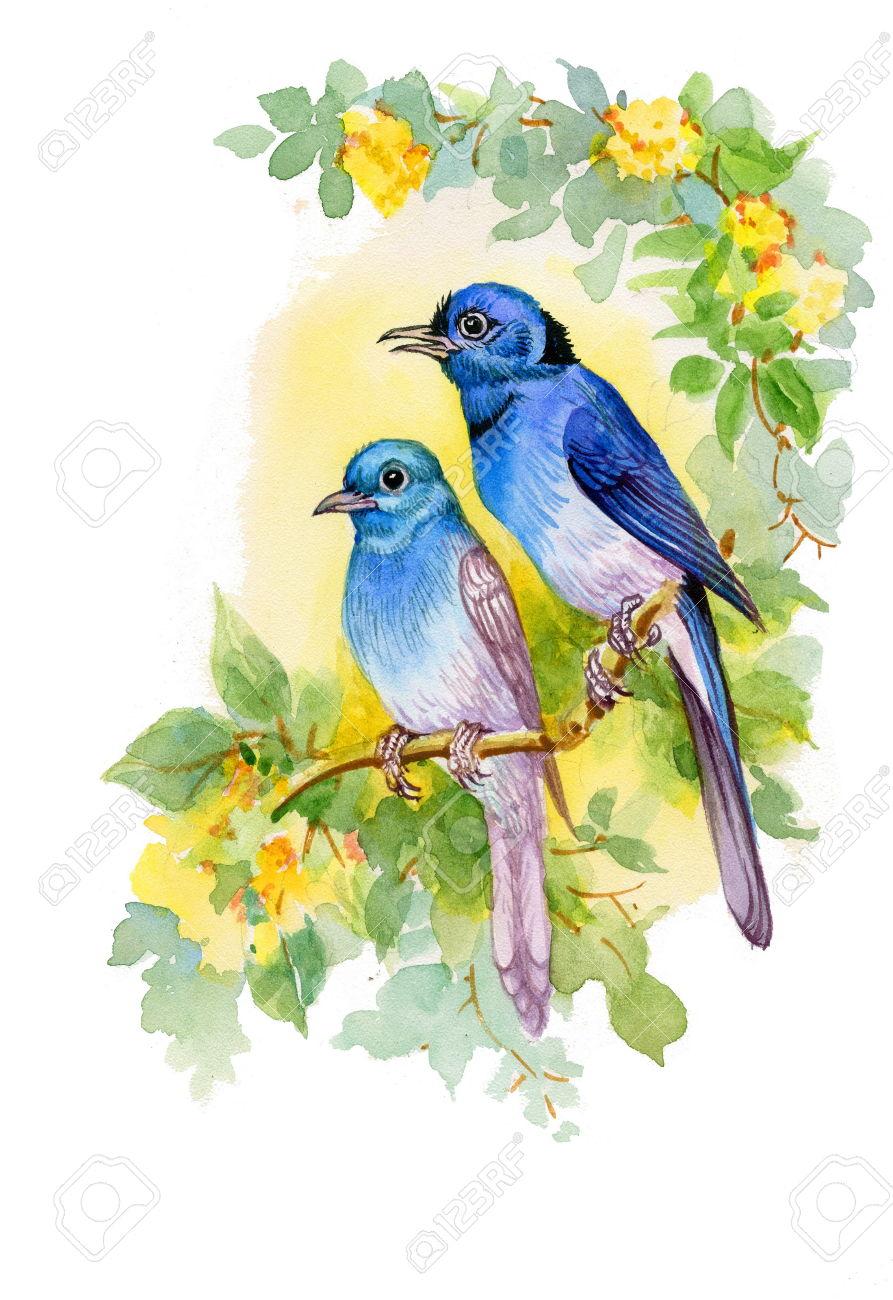 صور طيور 9