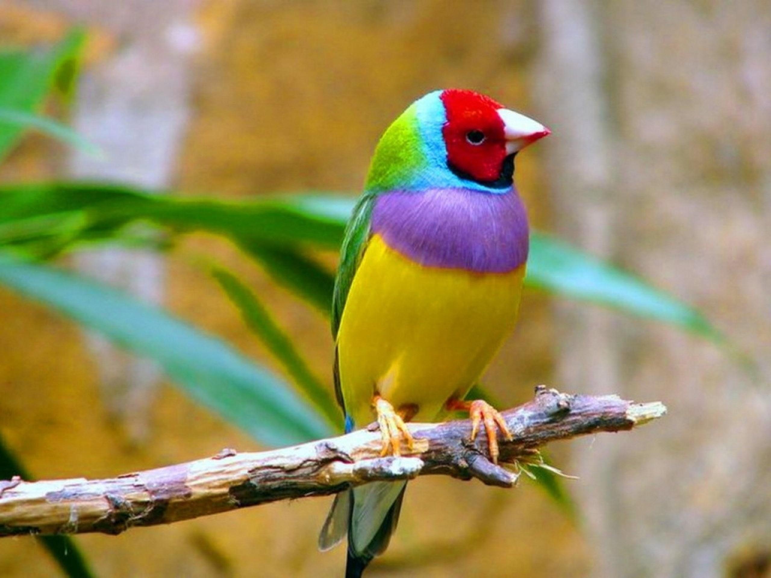 صور عصافير 1