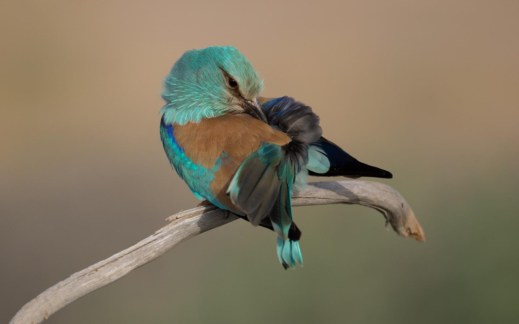 صور عصافير 11