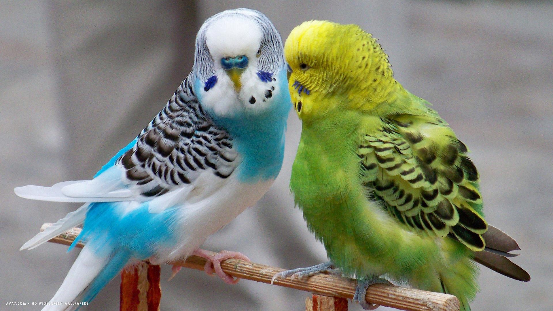 صور عصافير 13