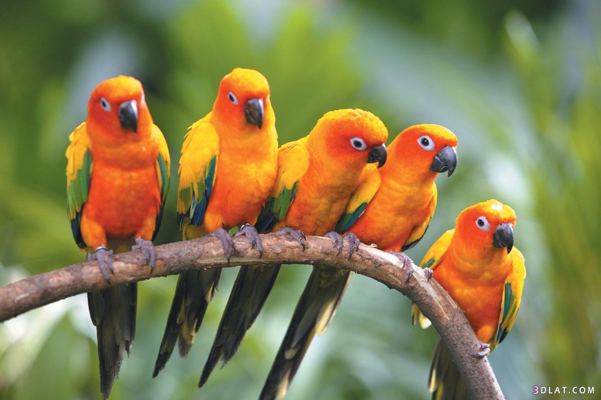 صور عصافير 14
