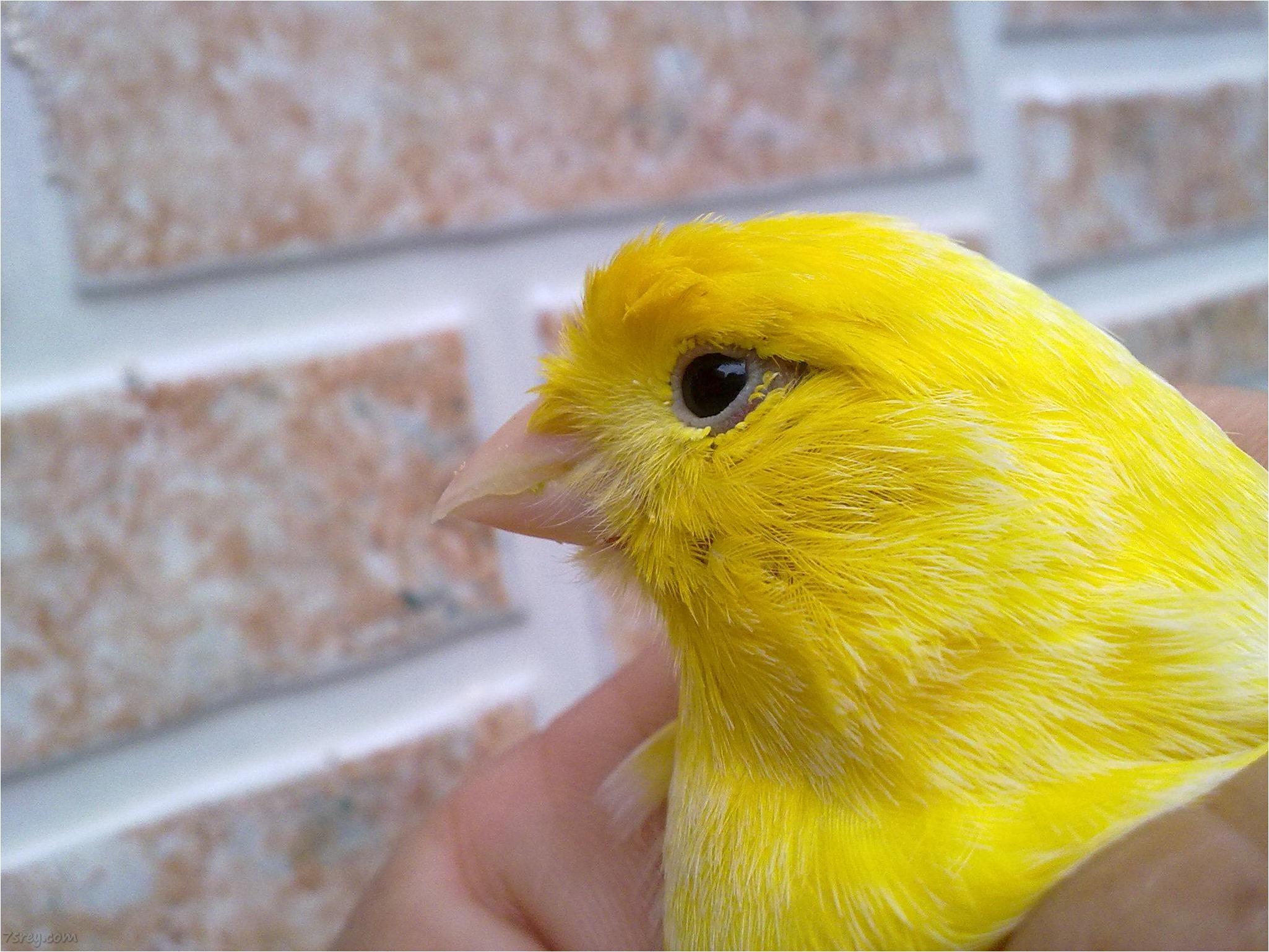 صور عصافير 19