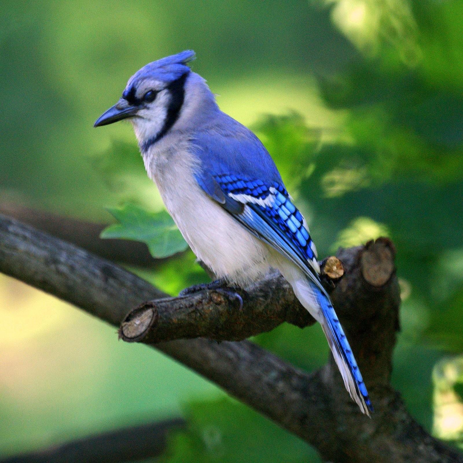 صور عصافير 2