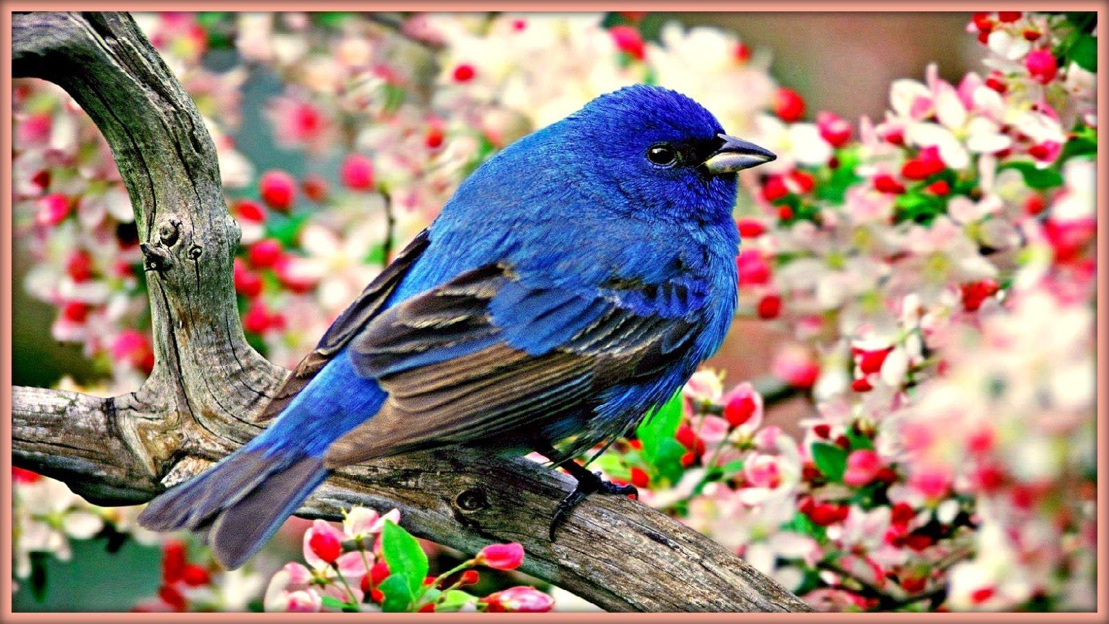 صور عصافير 20