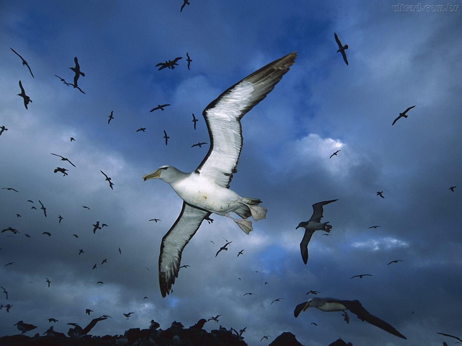 صور عصافير 24