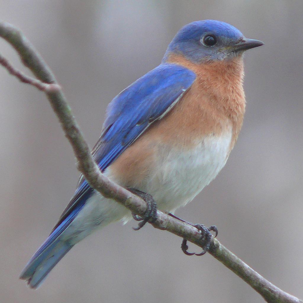 صور عصافير 25