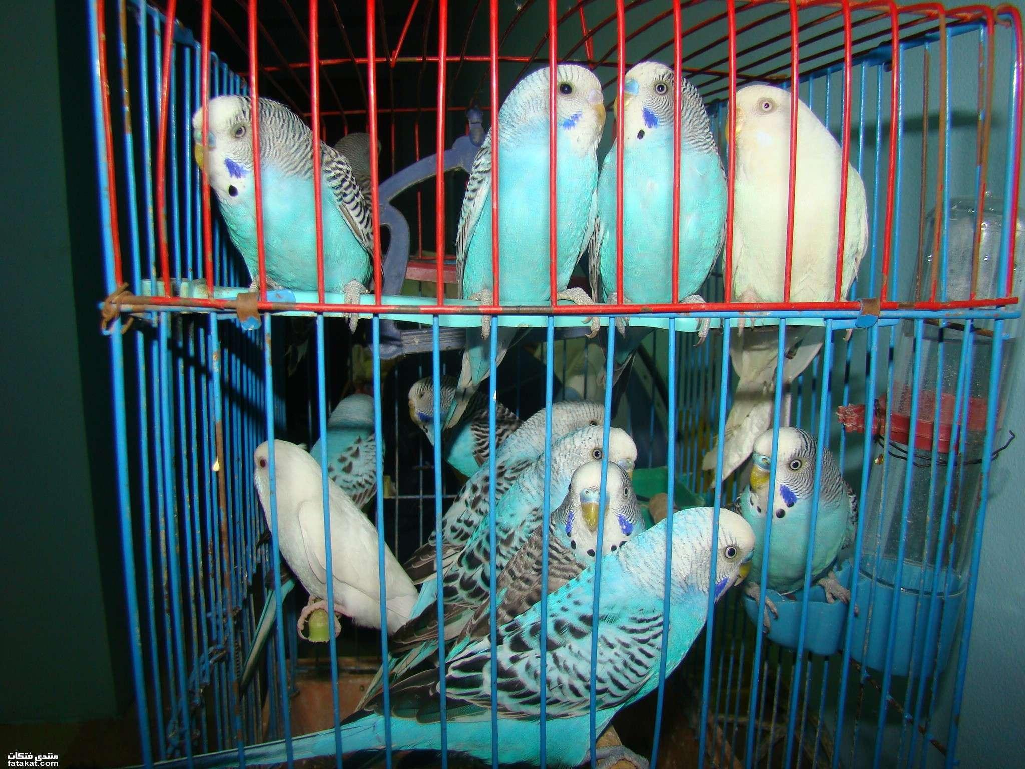 صور عصافير 26