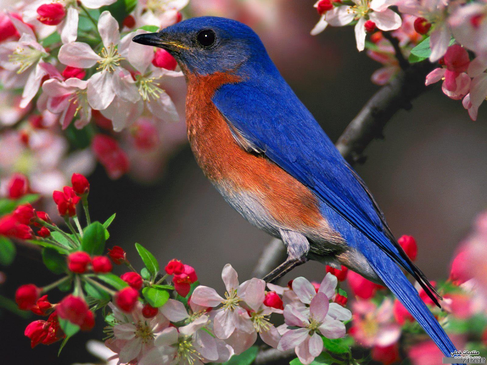 صور عصافير 31
