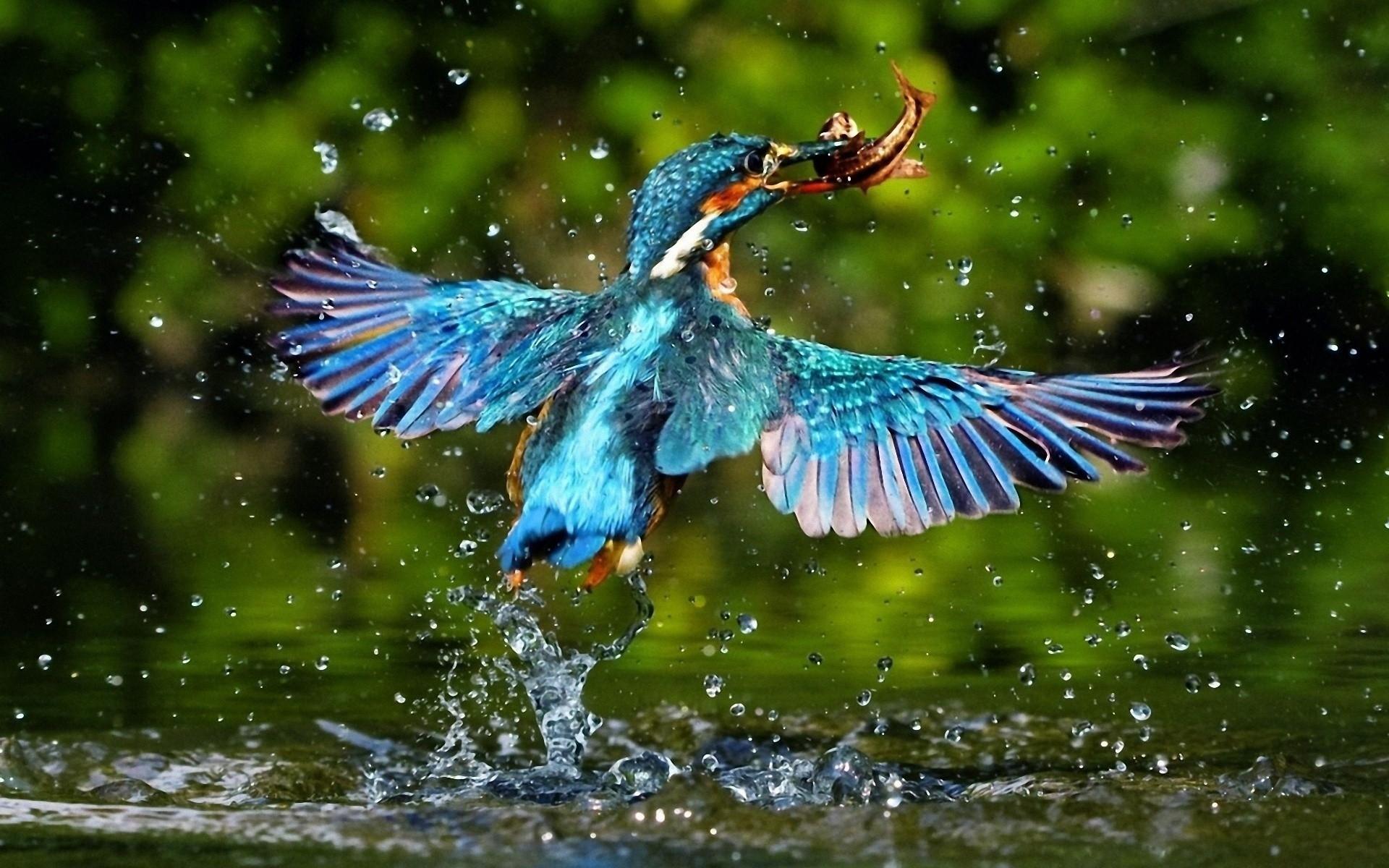 صور عصافير 5