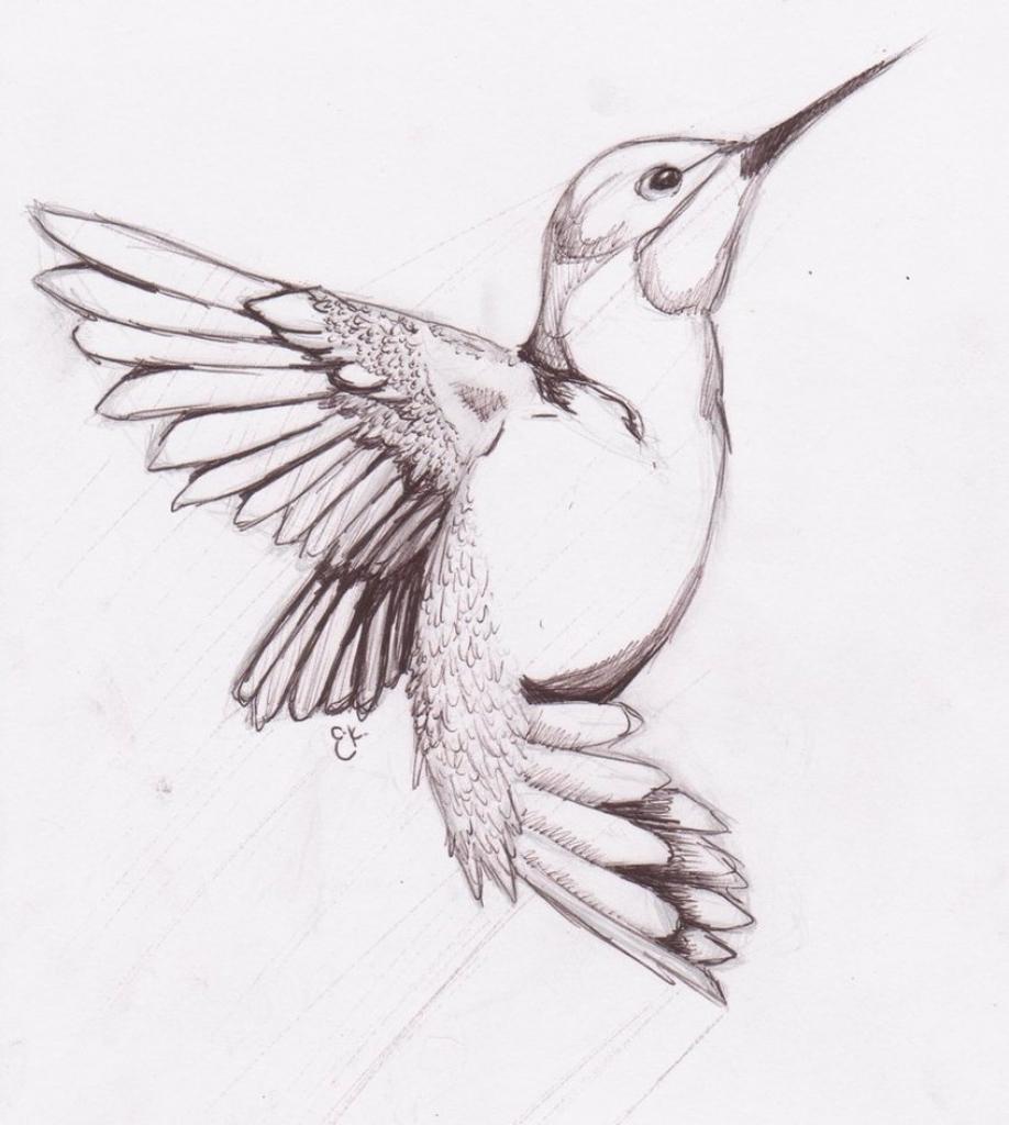 صور عصافير 6