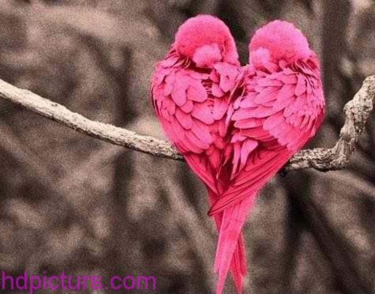 صور عصافير 7