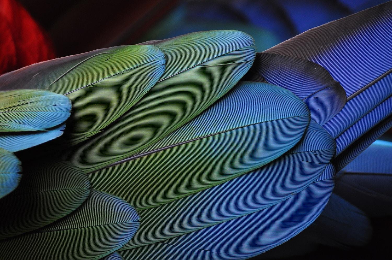 صور عصافير 8