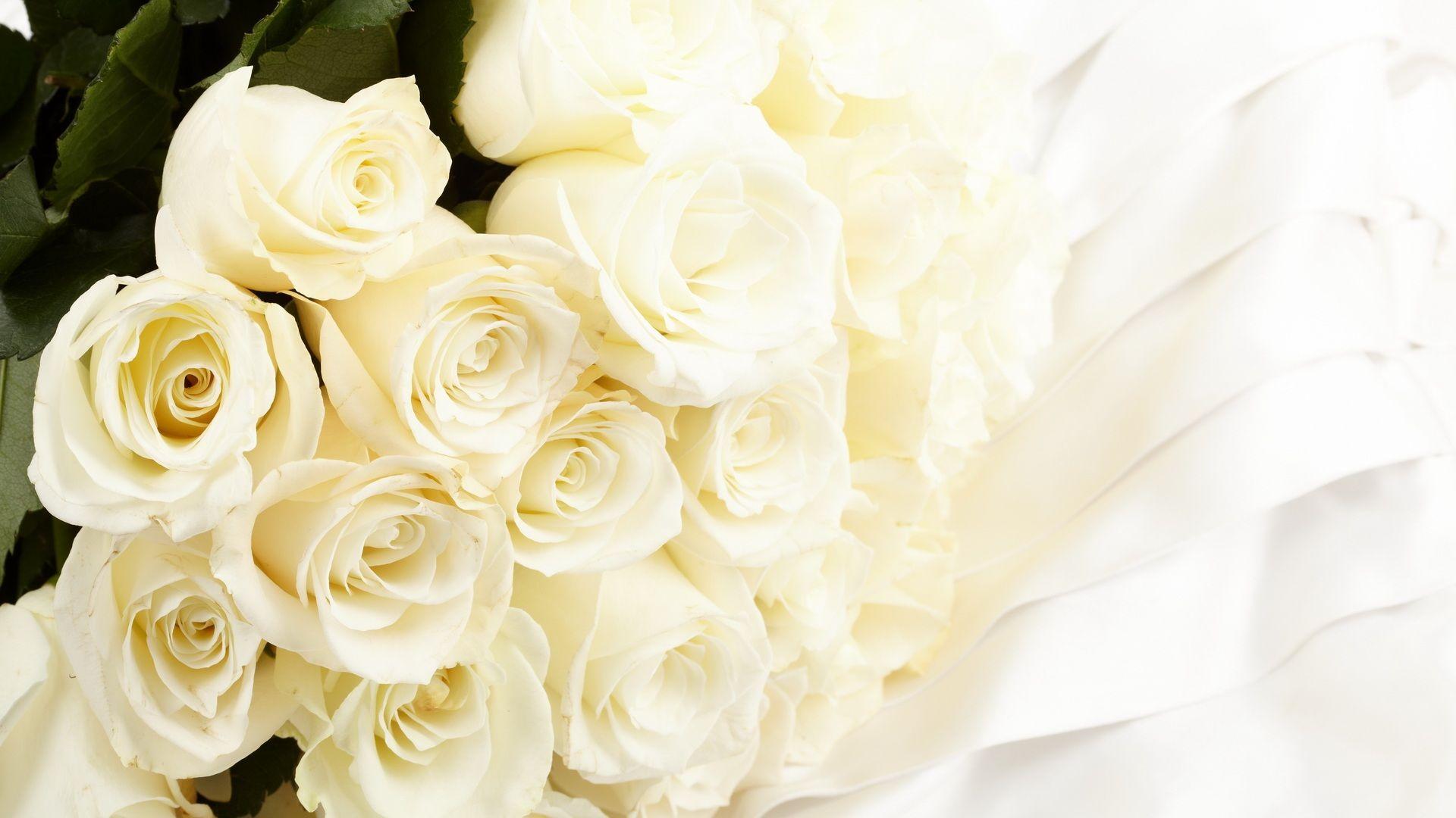 صور ورد جميل صور ورد رومانسى HD 2020 معلومات عن الورد 12