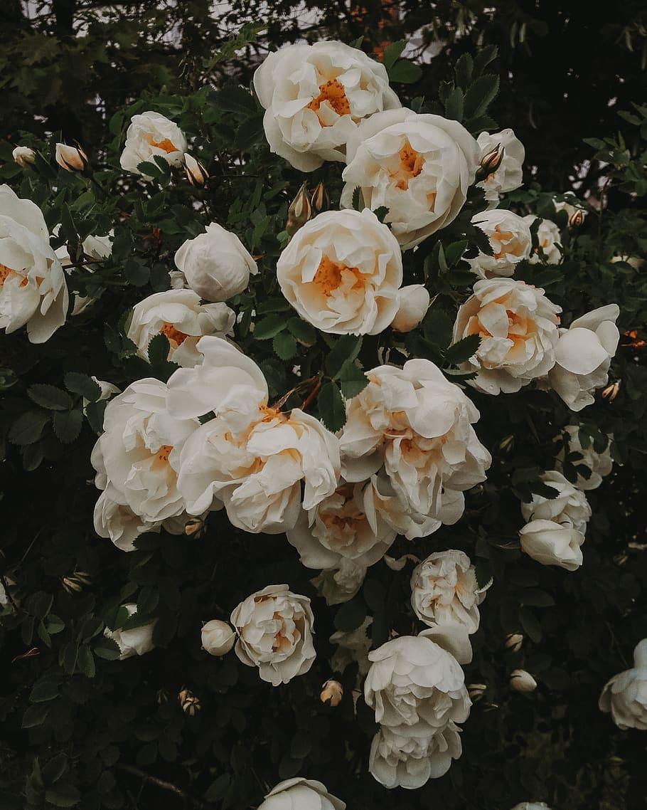 صور ورد جميل صور ورد رومانسى HD 2020 معلومات عن الورد 14
