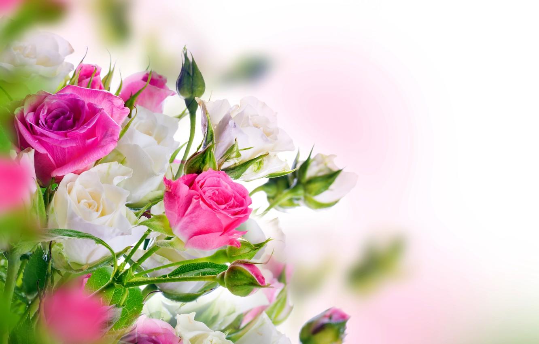 صور ورد جميل صور ورد رومانسى HD 2020 معلومات عن الورد 4