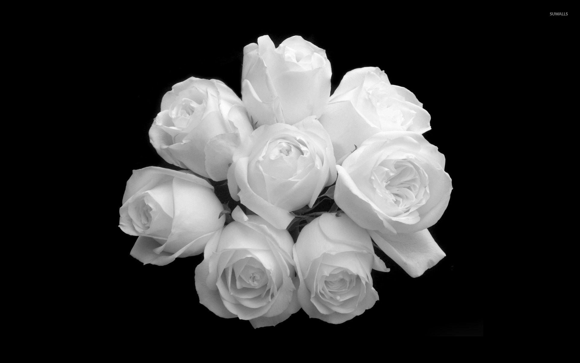 صور ورد جميل صور ورد رومانسى HD 2020 معلومات عن الورد 8